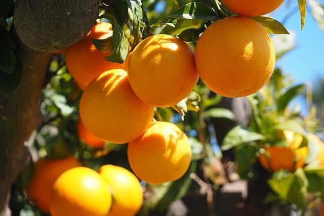 La vitamine C est-elle le remède universel pas cher et non brevetable ?